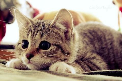梦见被猫咬_周公解梦梦到被猫咬是什么意思_做梦梦见