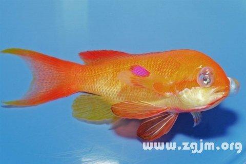 梦见鱼_周公解梦梦到鱼是什么意思_做梦梦见鱼好不好