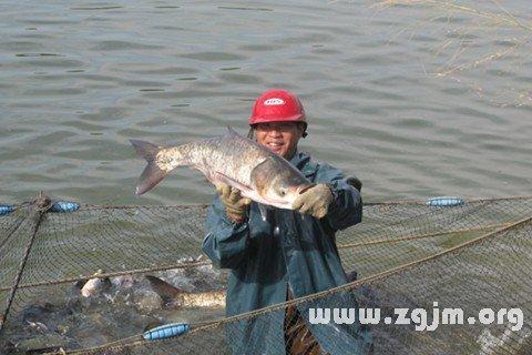 梦见自己在河里抓鱼
