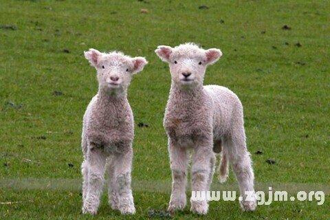 梦见骑羊是什么意思