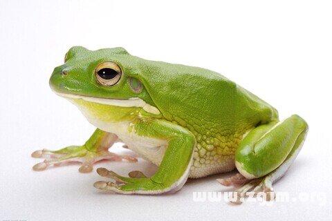 孕妇梦见吃青蛙肉