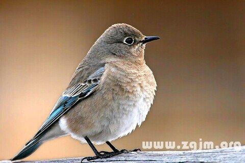 梦见鸟类_周公解梦梦到鸟类是什么意思_做梦