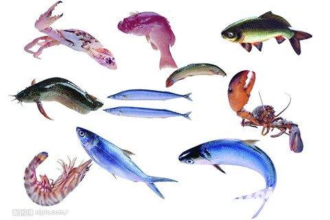 梦见很多鱼和虾蟹