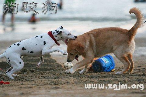 梦见狗打架 狗咬狗_周公解梦梦到狗打架 狗咬狗是什么
