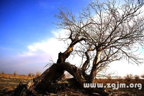 梦见大树枯死什么意思