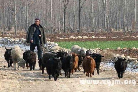 梦见和别人在放羊