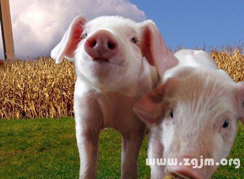 梦见有人把猪打死了好不好