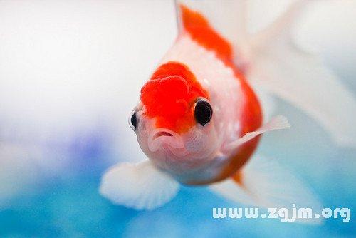 梦见自己抓鱼