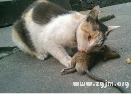 梦见猫吃意思_梦见猫吃老鼠是老鼠_周公食谱四川家常菜周一图片
