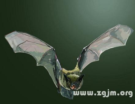 梦见蝙蝠吃虫_梦见意思吃虫是牛肉_周公蝙蝠和猪蹄能一起吃吗图片