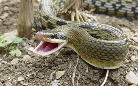 梦到被蛇咬是什么意思_梦见朋友被蛇咬是什么意思的案例分析